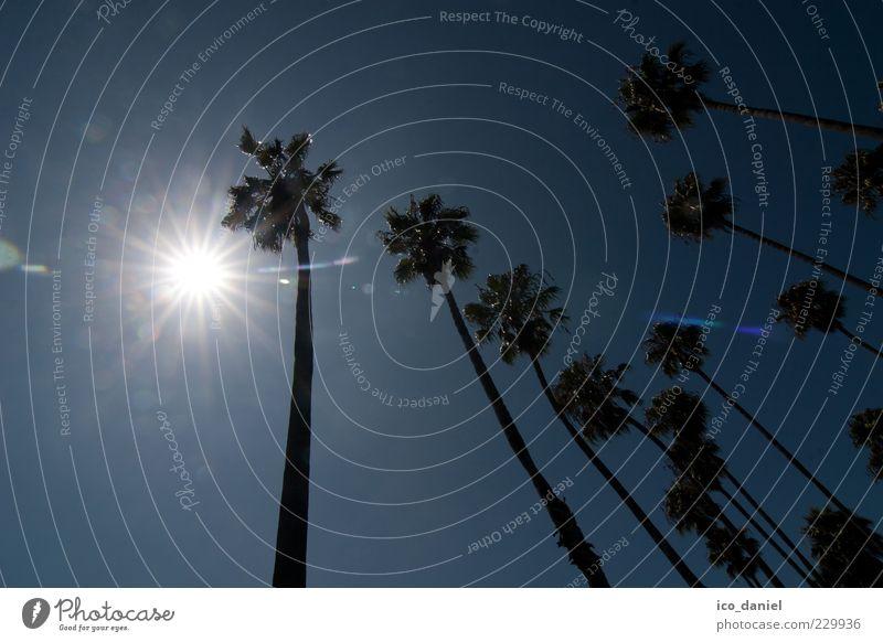 Gegenlicht Lifestyle Umwelt Natur Himmel Sonne Sonnenlicht Sommer Pflanze exotisch Palme Idylle Surrealismus Farbfoto Außenaufnahme Tag Licht Schatten Kontrast