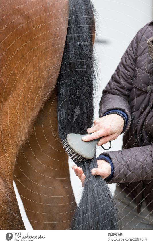 Pferdepflege - Der Schweif Frau Mensch Tier schwarz Erwachsene Lifestyle Sport Glück Freizeit & Hobby glänzend authentisch Reinigen streichen stoppen Haustier