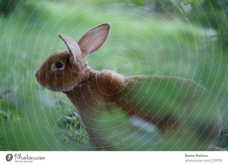 Blitzschnell eil' ich dahin Natur schön Freude Glück lustig braun sitzen Fröhlichkeit Wildtier Wunsch Tiergesicht Freundlichkeit Hase & Kaninchen Wachsamkeit