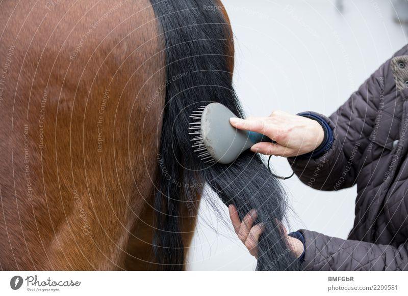 Schweif Pferd wird gekämmt Frau Mensch Tier Erwachsene Lifestyle Sport braun Freizeit & Hobby streichen stoppen Gelassenheit Haustier Vertrauen Fell Jacke