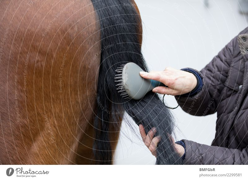 Schweif Pferd wird gekämmt Lifestyle Freizeit & Hobby Reiten Sport Reitsport Mensch Frau Erwachsene 1 30-45 Jahre Jacke Tier Haustier Nutztier Kamm Haarbürste