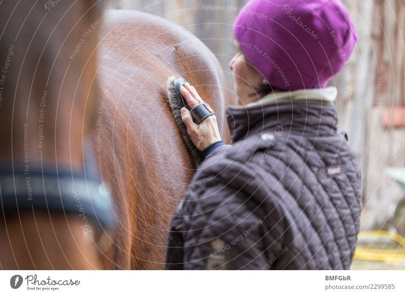 Reiterin putzt Ihr Pferd Lifestyle Reichtum Freude Glück harmonisch Zufriedenheit Freizeit & Hobby Reiten Sport Reitsport Mensch feminin Frau Erwachsene Leben 1