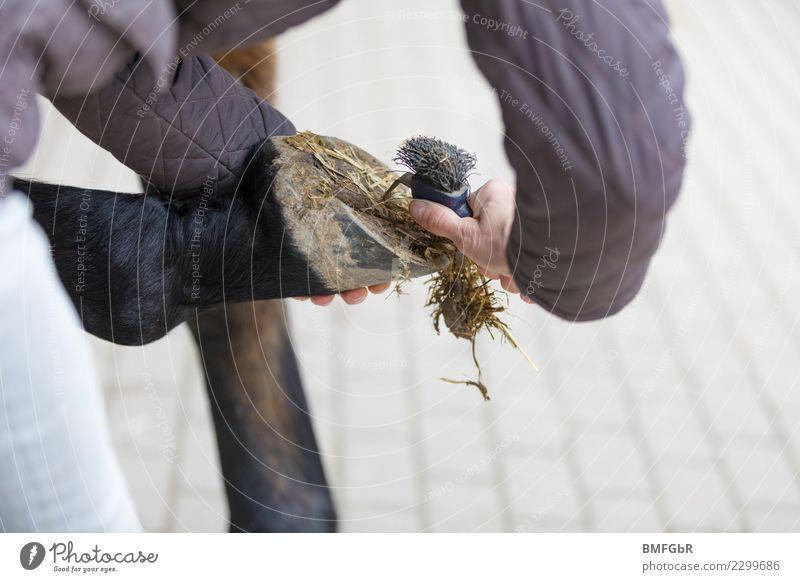 so ein Mist... Frau Mensch Tier Erwachsene Lifestyle Sport Freizeit & Hobby dreckig Arme Reinigen Sicherheit festhalten Pferd Gelassenheit Haustier Vertrauen