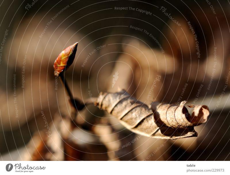 Ende & Anfang Natur alt Pflanze Blatt schwarz Umwelt Herbst Frühling klein Traurigkeit Park braun Beginn Wachstum neu Sträucher