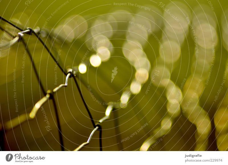 Maschendraht Zaun Metall leuchten grün Maschendrahtzaun Schlaufe Netz Punkt Farbfoto Außenaufnahme Licht Lichterscheinung Schwache Tiefenschärfe