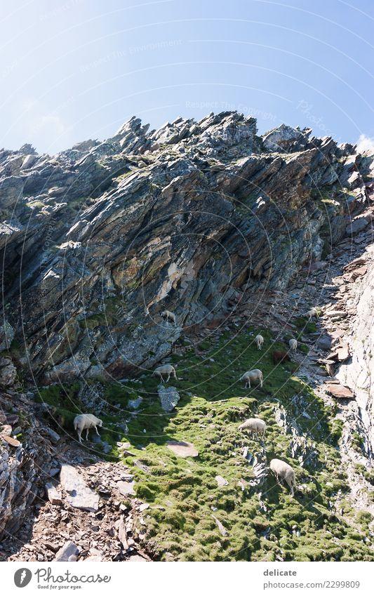 Berglandschaft Ferien & Urlaub & Reisen Sommer Landschaft Tier Ferne Berge u. Gebirge Tierjunges Tourismus Freiheit Ausflug Freizeit & Hobby wandern Wildtier