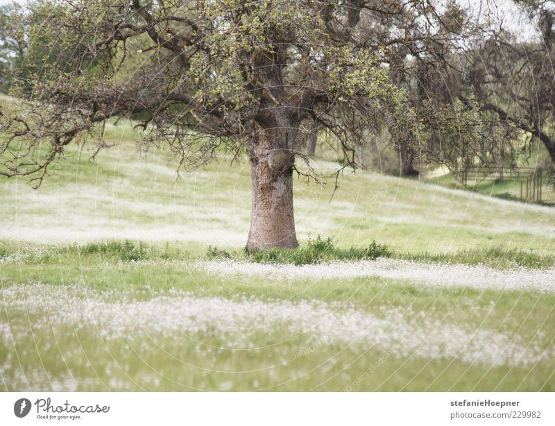 spring time Natur grün Baum Pflanze Sommer Erholung Wiese Umwelt Landschaft Gras Garten Frühling träumen Stimmung Park Zufriedenheit