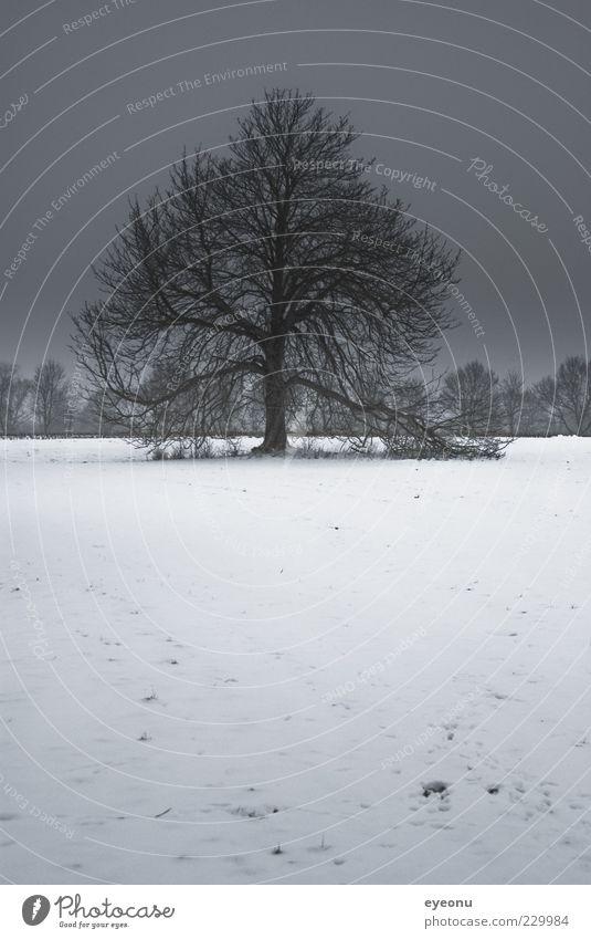 Winterbaum Natur Baum Pflanze ruhig Einsamkeit Ferne Wiese kalt Schnee Landschaft Wetter Eis Feld Kraft Wind
