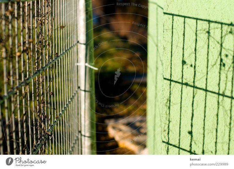 Zaun und sein Schatten Umwelt Natur Pflanze Sonne Sonnenlicht Schönes Wetter Ranke Mauer Wand dehydrieren Wachstum hell grün Barriere Metallzaun Farbfoto