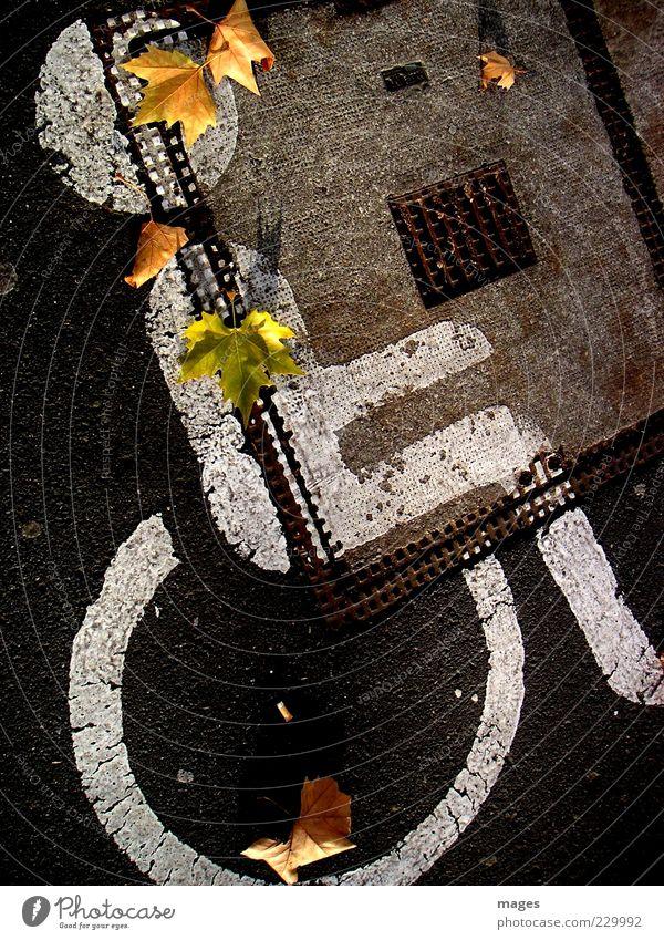 Belastung Mensch Straße Farbstoff fahren Asphalt Zeichen Krankheit Mobilität Herbstlaub Parkplatz Gully Rollstuhl Verkehrszeichen Fahrbahnmarkierung