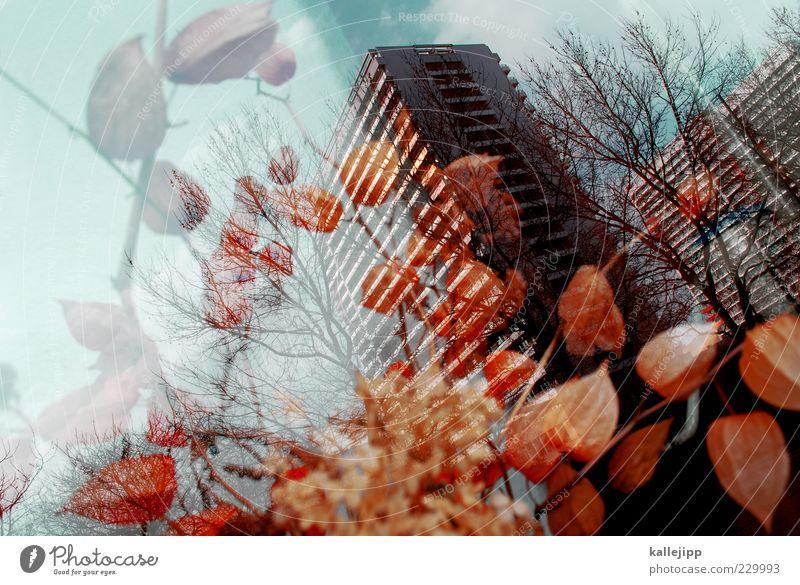 urban flowers Natur Pflanze Sträucher Blatt Blüte Hauptstadt Hochhaus Fenster Design Kunst Nostalgie Romantik Trockenblume Plattenbau orange Strukturen & Formen