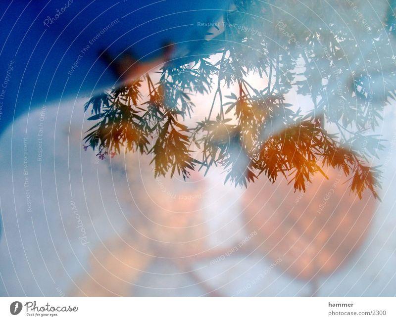 blatt im wasser Blatt Reflexion & Spiegelung Herbst blau Wasser