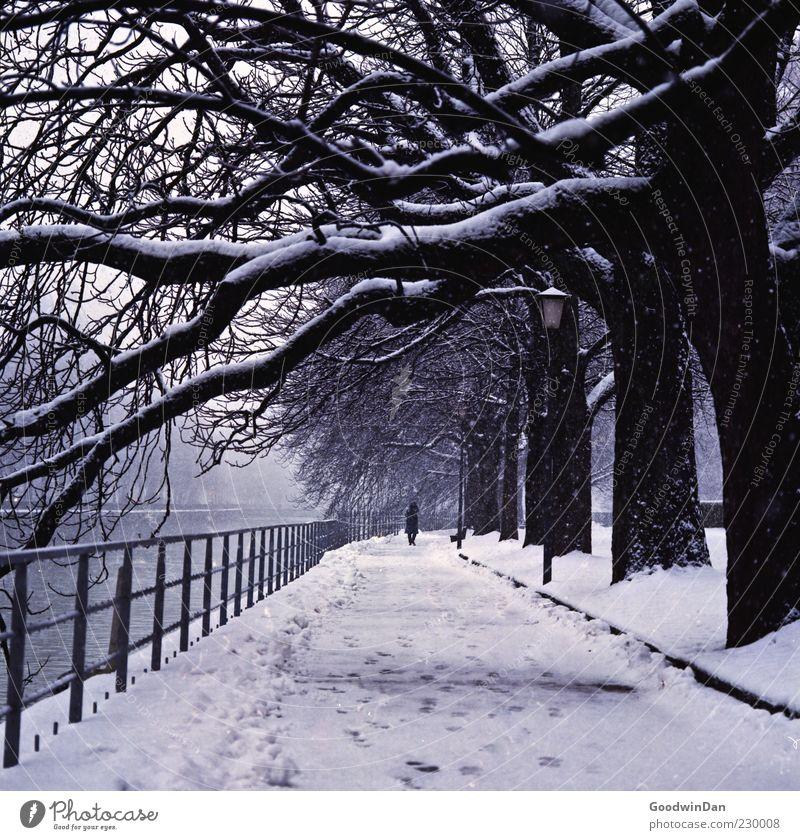a winters tale Mensch maskulin 1 Umwelt Natur Urelemente Winter Klima Wetter Sturm Eis Frost Schnee Schneefall Baum Park Fluss alt authentisch außergewöhnlich