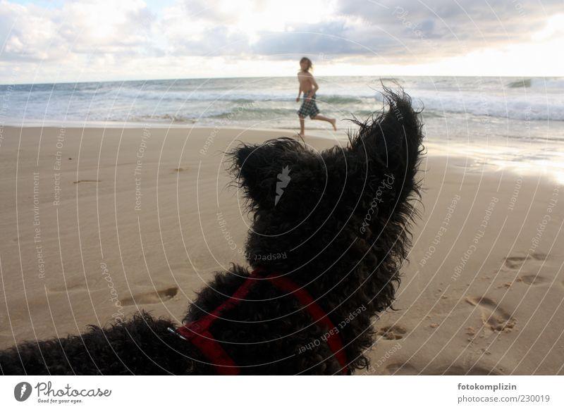 Kind und Hund am Meer Sommer Strand Freude Tier Leben Spielen Freiheit Freundschaft Kindheit Laufsport Neugier Fell Spuren Fußspur