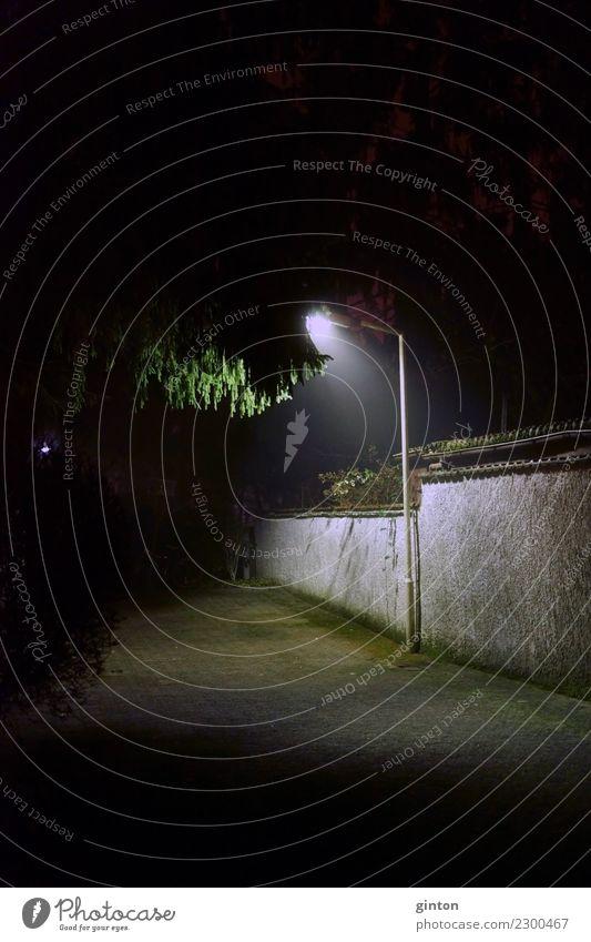 Laterne in der Nacht grün Baum Blatt dunkel schwarz Beleuchtung Lampe Romantik Dinge Straßenbeleuchtung Baumkrone Surrealismus Nachtaufnahme