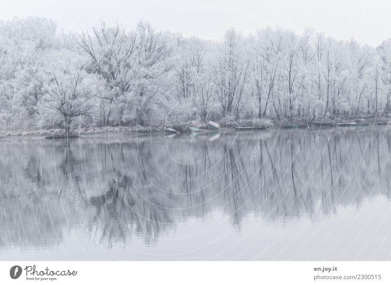 eisige Stille Natur Pflanze weiß Landschaft Einsamkeit ruhig Winter Wald Religion & Glaube Umwelt kalt Traurigkeit Tod See Idylle Klima