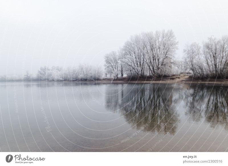 gebündelt Natur Landschaft Himmel Winter Klima Wetter schlechtes Wetter Nebel Eis Frost Schnee Baum Seeufer frieren kalt weiß ruhig Trauer Einsamkeit
