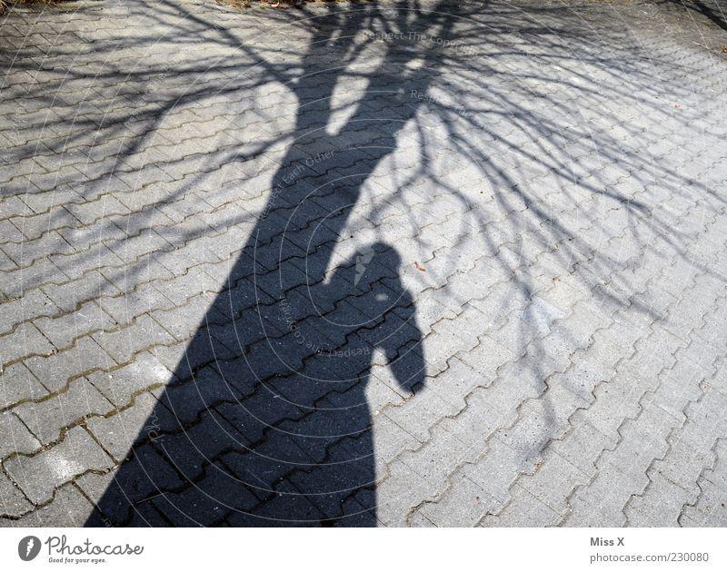 N Schatten haben Mensch Baum Winter hell Fotografie Ast Baumstamm Fotograf Textfreiraum Pflastersteine Fotografieren anlehnen Zweige u. Äste Beruf