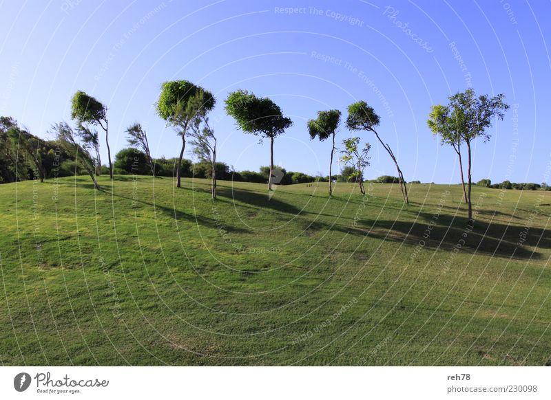 Golfplatz mit Bäumen Umwelt Natur Landschaft Pflanze Himmel Wolkenloser Himmel Sommer Schönes Wetter Baum Grünpflanze Park Wiese Hügel ästhetisch blau grün