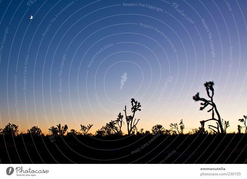 Mojave Desert, California, USA Ferien & Urlaub & Reisen Freiheit Sommer Landschaft Pflanze Himmel Wolkenloser Himmel Nachthimmel Mond Kaktus yoshua tree Wüste