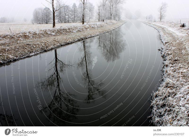 Winterzauber Wasser Baum Einsamkeit kalt Landschaft Eis Frost Flussufer Wetter Wasserspiegelung