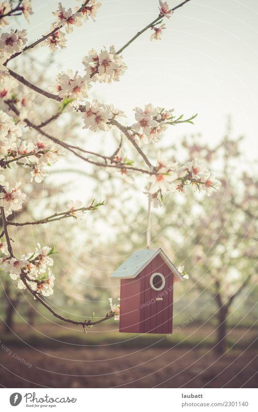 Frühlingsfreude Lifestyle Freizeit & Hobby Umwelt Natur Pflanze Luft Blume Blüte Kirschblüten Kirschbaum Mandelblüte Mandelbaum Vogel Nistkasten Futterhäuschen