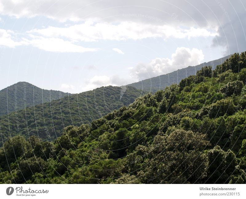 Grüner Dschungel Ferien & Urlaub & Reisen Berge u. Gebirge Natur Landschaft Pflanze Wolken Sonnenlicht Herbst Baum Sträucher Wald Hügel Wachstum wild grün ruhig