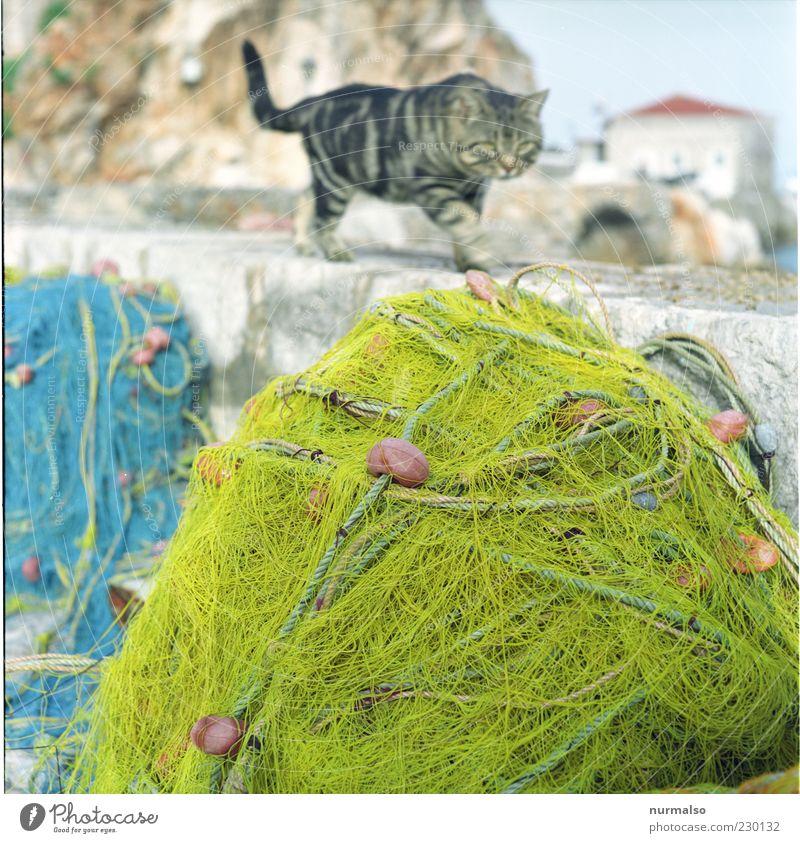 Katerfrühstück Meer Urlaubsort Griechenland Angeln Angelrute Hafen Fischereiwirtschaft Fischernetz Mole Katze 1 Tier Jagd ästhetisch gelb Wachsamkeit geduldig