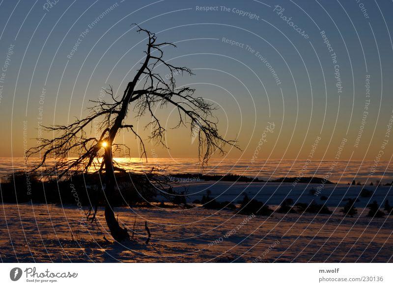 Die Rhön... Natur blau Baum Pflanze Sonne Winter ruhig Einsamkeit Ferne gelb Schnee Umwelt Landschaft Freiheit Stimmung Nebel