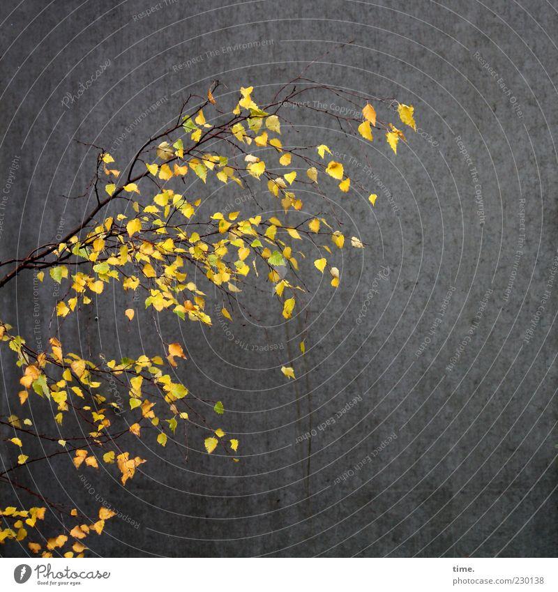 HH10.2 | Living Light In The Dead Dark Blatt Leben dunkel Wand Klima authentisch Hoffnung leuchten einzigartig Ast Zusammenhalt Herbstlaub Sorge Optimismus