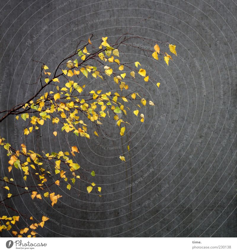HH10.2   Living Light In The Dead Dark Leben Blatt leuchten dunkel authentisch einzigartig Optimismus Hoffnung Klima Sorge Zusammenhalt Wand Ast Birke