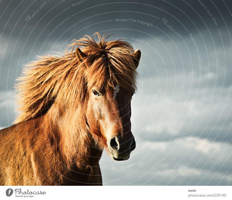 Freiwild Umwelt Tier Himmel Wolken Klima Wetter Wind Nutztier Wildtier Pferd Tiergesicht 1 stehen warten ästhetisch Freundlichkeit natürlich Stimmung Mähne