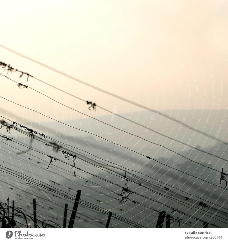 Weinberg am Morgen Himmel gelb Umwelt Landschaft orange Hügel Schönes Wetter diagonal Zaun Ernte Draht kahl Dunst Sonnenuntergang