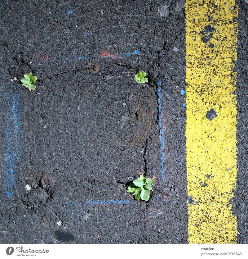 flower`s power grün Pflanze gelb Straße grau Farbstoff Frühling Erde Asphalt Riss kämpfen Textfreiraum Teer Schaden Durchbruch sprießen