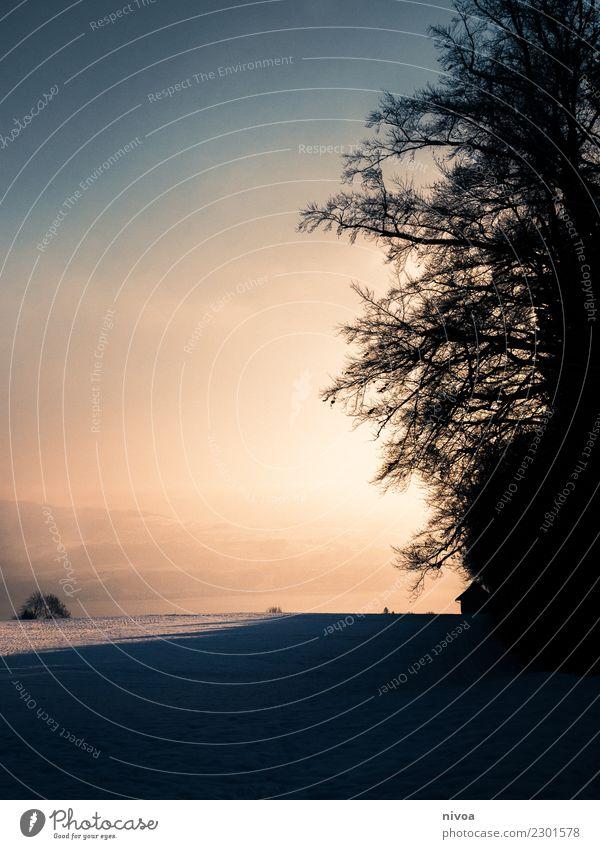 Dämmerung im Schnee Gesundheit Umwelt Natur Landschaft Pflanze Tier Nachthimmel Winter Klima Klimawandel Schönes Wetter Baum Feld Berge u. Gebirge Haus alt