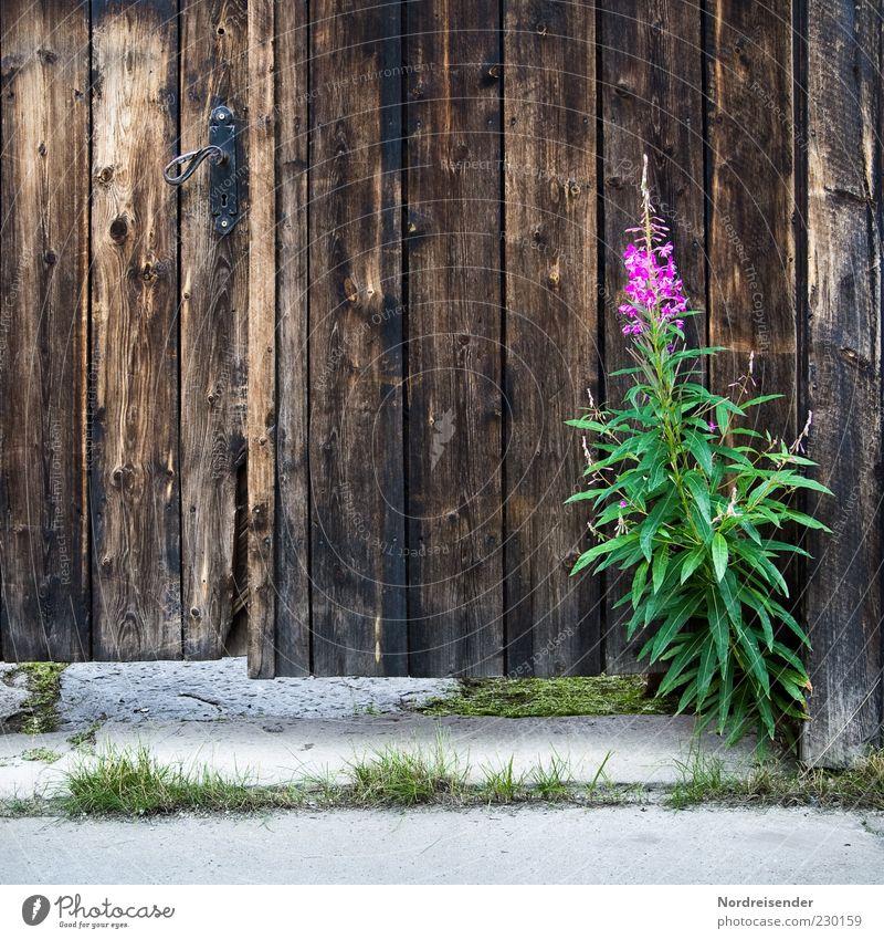Blümchen Natur Pflanze Sommer Blume Wildpflanze Tür Wege & Pfade Stein Holz alt Wachstum Freundlichkeit Fröhlichkeit schön natürlich braun grün violett Stimmung