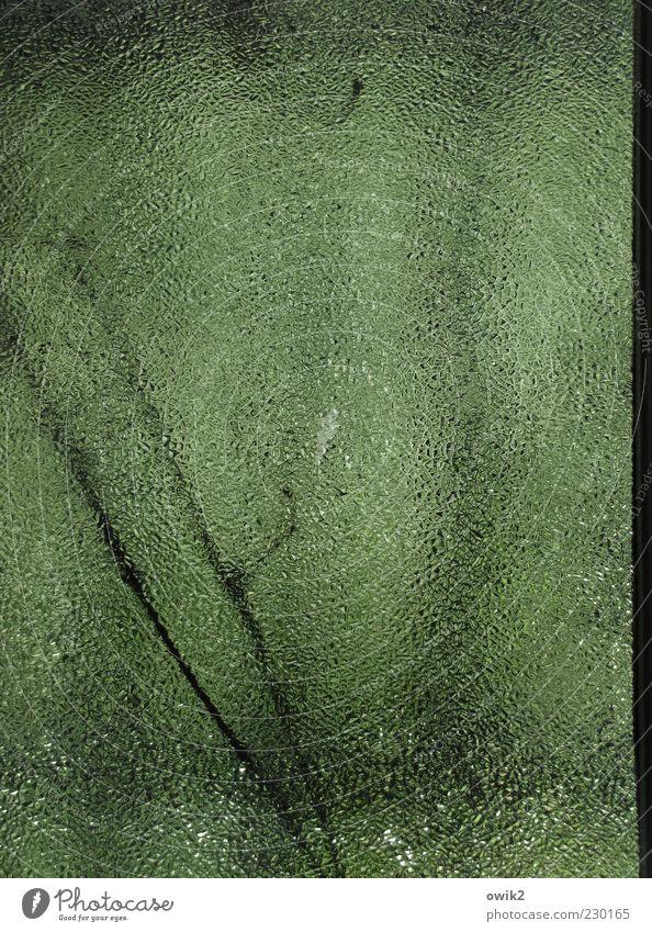 Terra X Natur Pflanze Zweige u. Äste Glas dünn einfach natürlich trist grau grün schwarz Umwelt Verfall Vergänglichkeit Wandel & Veränderung Indirektes Licht