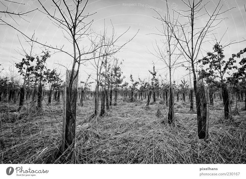 Kalter Wintermorgen Himmel Natur weiß Baum Pflanze Wolken schwarz Umwelt dunkel Landschaft Holz Gras Wind Feld Sträucher schlechtes Wetter