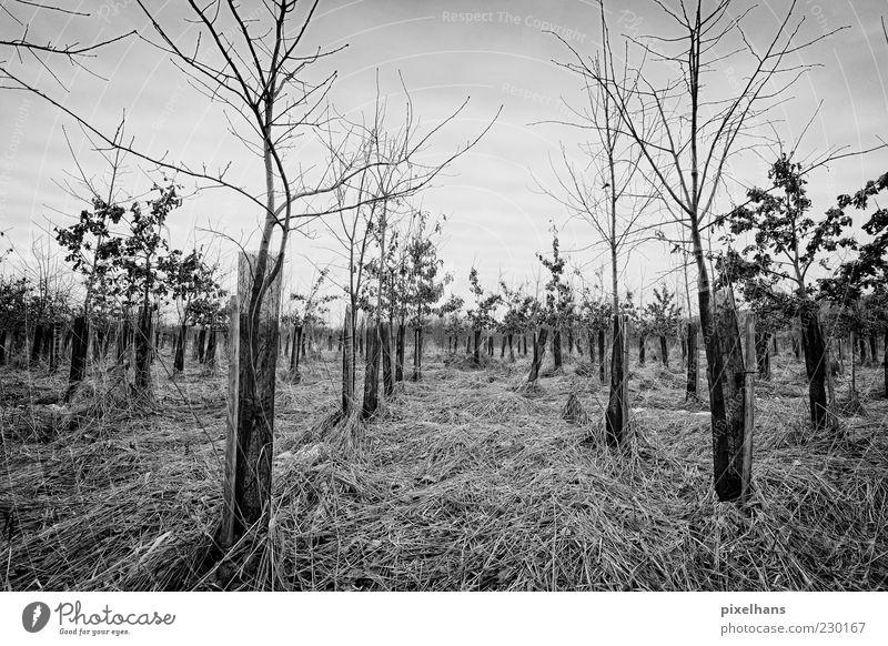 Kalter Wintermorgen Umwelt Natur Landschaft Pflanze Himmel Wolken schlechtes Wetter Wind Baum Gras Sträucher Feld Holz dunkel schwarz weiß Schwarzweißfoto