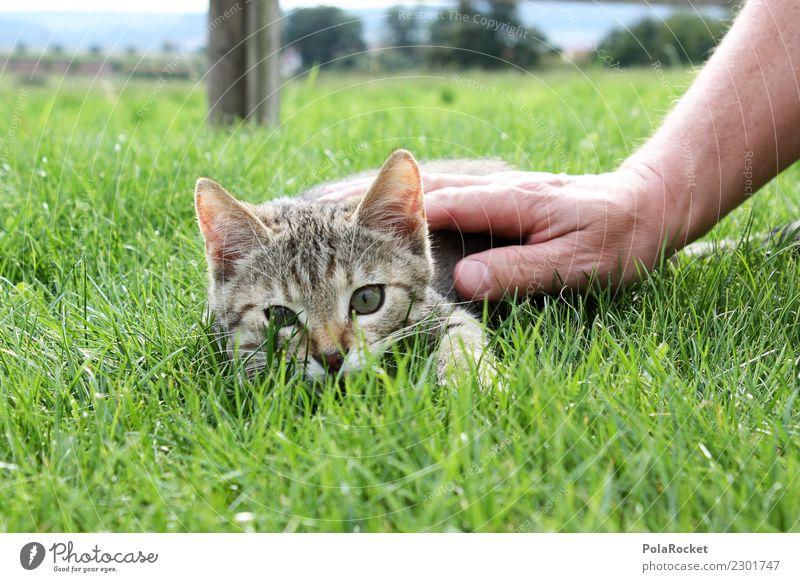 #S# Findus Katze Glück Katzenbaby Hand Freundschaft Spielen Kater Findus Hauskatze schön Gras grün Tiger weich Wärme Treue Garten niedlich gestreift