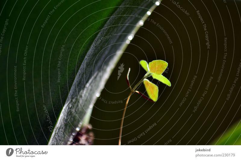 Unterm Blätterdach grün Pflanze Blatt klein glänzend frisch Wachstum neu Hoffnung leuchten Schutz zart Stengel Biegung gekrümmt biegen