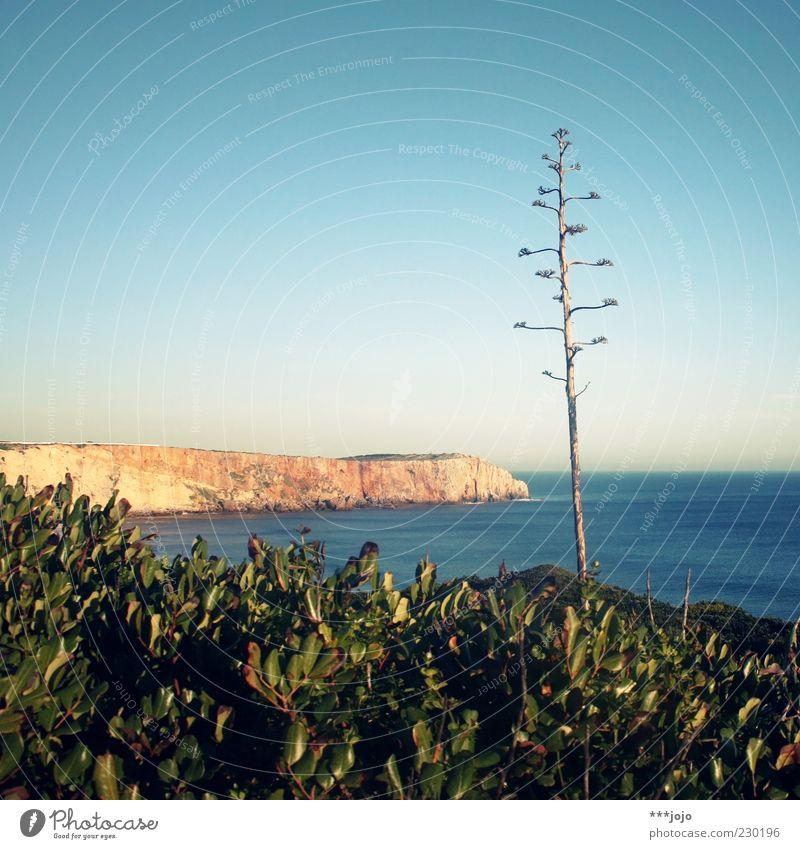 a(l)ga(r)ve. Landschaft Wasser Himmel Frühling Schönes Wetter Pflanze Agave Kaktus Felsen Küste Meer Atlantik Ferien & Urlaub & Reisen Sagres Algarve Felswand