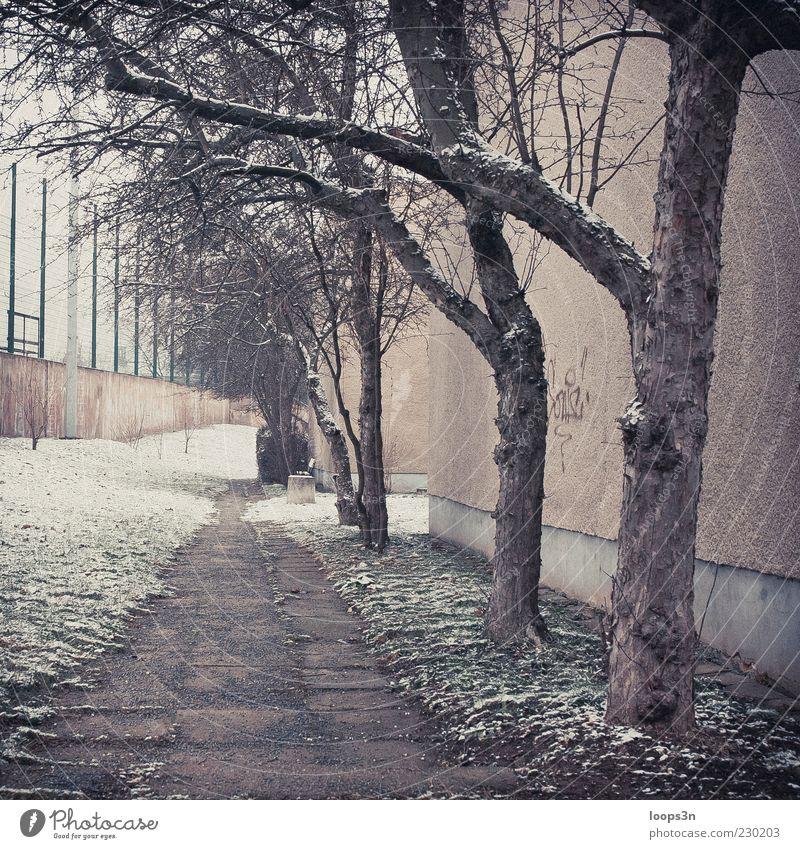After Parties III Baum Winter Einsamkeit Haus kalt Schnee Umwelt Wand Traurigkeit Mauer Eis Nebel Fassade authentisch trist Frost