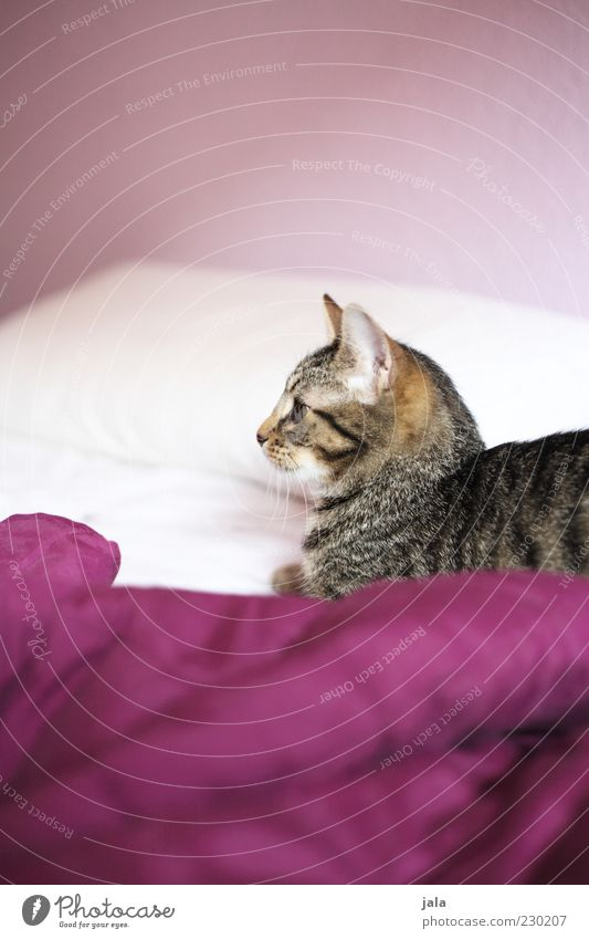 leibwächter Bett Tier Haustier Katze Tiergesicht Fell 1 Tierjunges weiß Farbfoto Innenaufnahme Menschenleer Textfreiraum oben Textfreiraum unten Licht