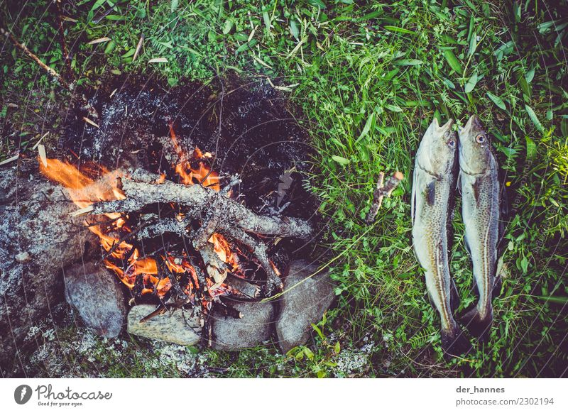 Abendessen Lebensmittel Fisch Ernährung Festessen Bioprodukte Freizeit & Hobby Angeln Ferien & Urlaub & Reisen wandern Natur Wasser Gras 2 Tier Stein Holz heiß