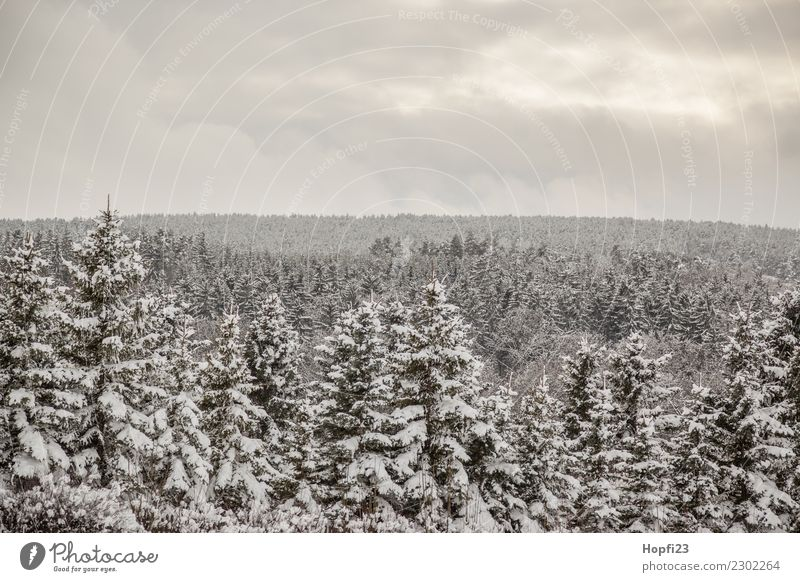 Landschaft im Winter Ferien & Urlaub & Reisen Tourismus Ausflug Abenteuer Ferne Freiheit Schnee Winterurlaub Umwelt Natur Pflanze Baum Wald kalt nass trist grau