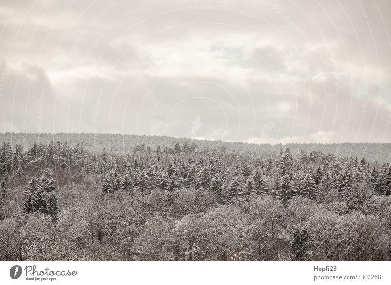 Landschaft im Winter Ferien & Urlaub & Reisen Tourismus Ausflug Abenteuer Ferne Freiheit Schnee Winterurlaub Umwelt Natur Pflanze Klima Wetter Eis Frost Baum