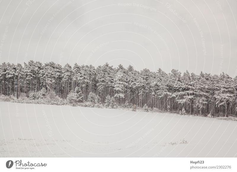 Landschaft im Winter Ferien & Urlaub & Reisen Ausflug Abenteuer Ferne Freiheit Schnee Winterurlaub Umwelt Natur Pflanze Eis Frost Baum Wiese Wald Hügel kalt