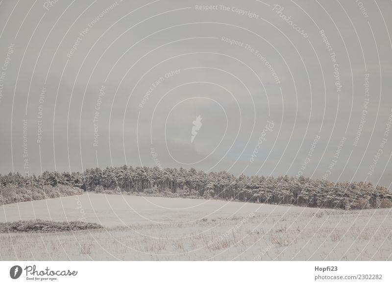 Landschaft im Winter Ferien & Urlaub & Reisen Ausflug Abenteuer Freiheit Schnee Winterurlaub Natur Wetter Eis Frost Wiese Feld Wald Hügel kalt nass trist grau