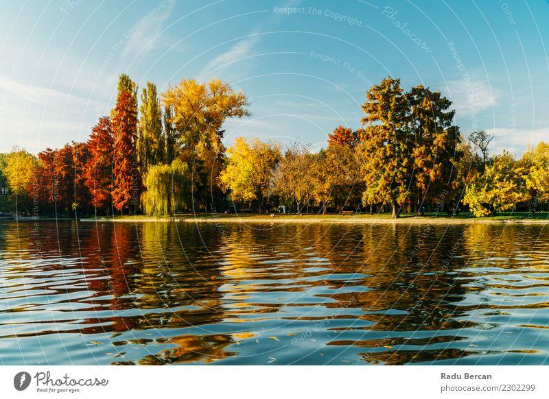 Herbstsaison in der Bukarester Parklandschaft Umwelt Natur Landschaft Wasser Himmel Wetter Schönes Wetter Baum Gras Wald Teich See schön natürlich blau